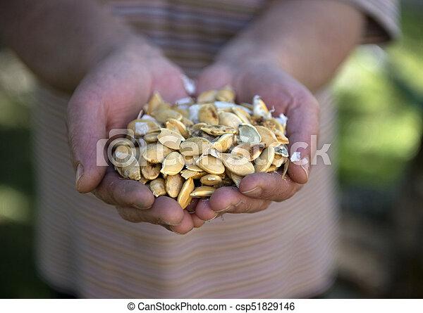 Pumpkin seeds image - csp51829146