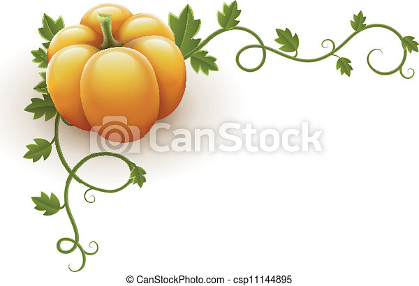 pumpkin vegetable with green leaves - csp11144895