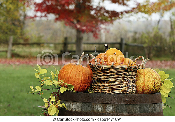Pumpkins and gourds on old barrel - csp61471091