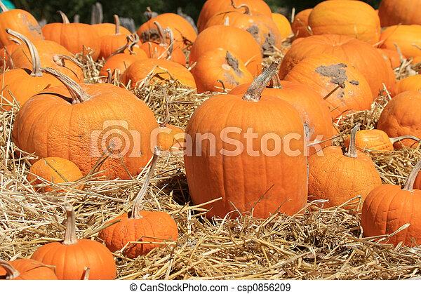 Pumpkins (Cucurbita moschata) Drying - csp0856209