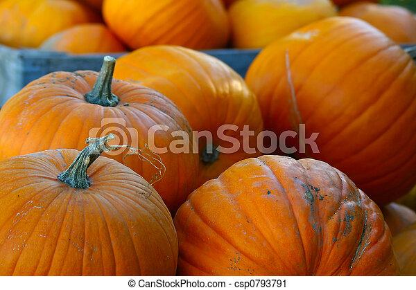 Pumpkins (Cucurbita moschata) - csp0793791