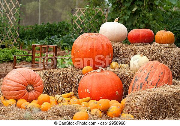 Pumpkins (Cucurbita moschata) - csp12958966