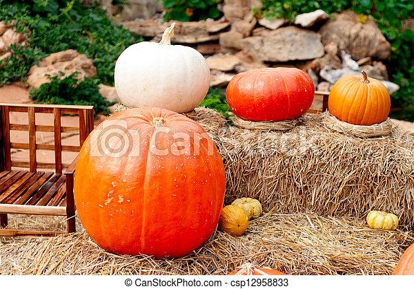 Pumpkins (Cucurbita moschata) - csp12958833
