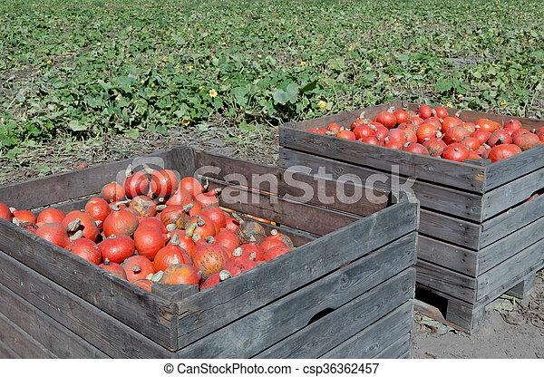Pumpkins in a wooden crate - csp36362457