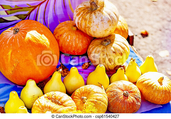 Pumpkins of different sizes, selling pumpkins on the market - csp61540427
