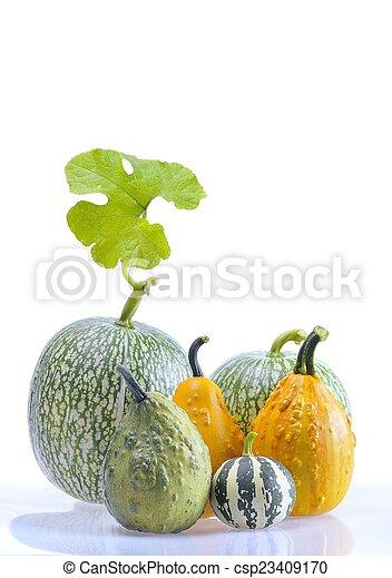 Pumpkins. - csp23409170