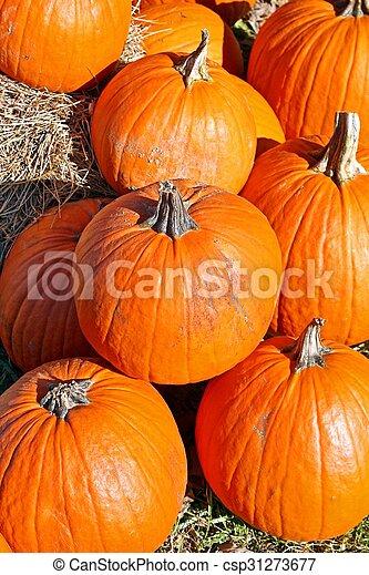 Pumpkins - csp31273677