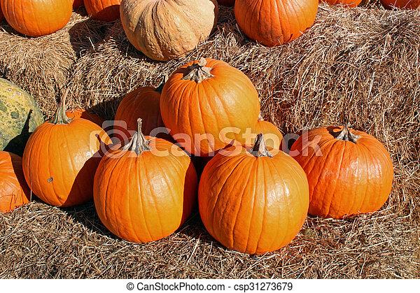 Pumpkins - csp31273679