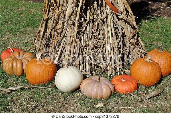 Pumpkins - csp31373278