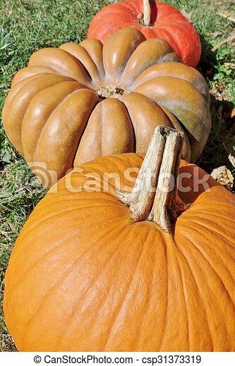 Pumpkins - csp31373319
