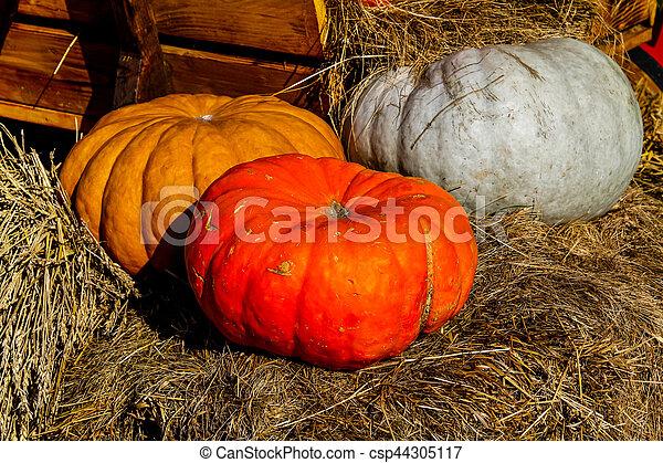 Pumpkins - csp44305117