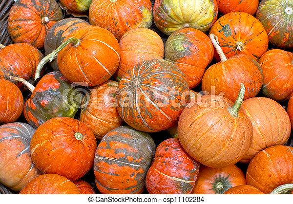 pumpkins - csp11102284
