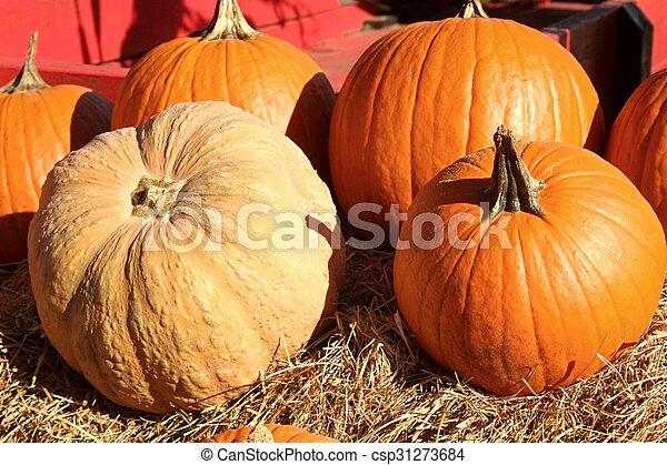 Pumpkins - csp31273684