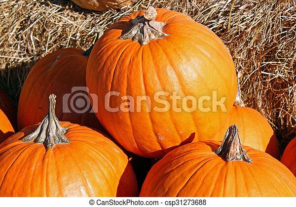 Pumpkins - csp31273688