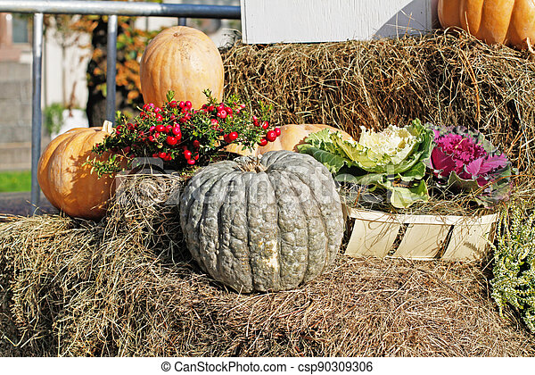 Pumpkins, pink berries of pernettya, cabbage as autumn decoration at market place - csp90309306