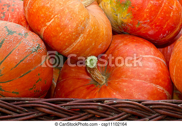 pumpkins - csp11102164