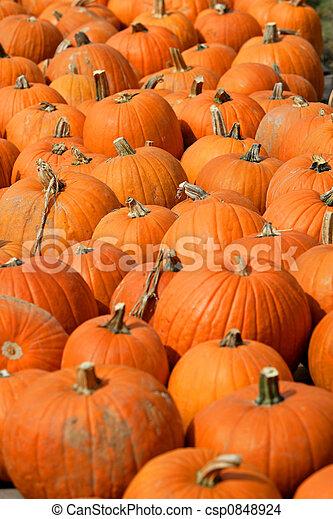 Pumpkins - csp0848924