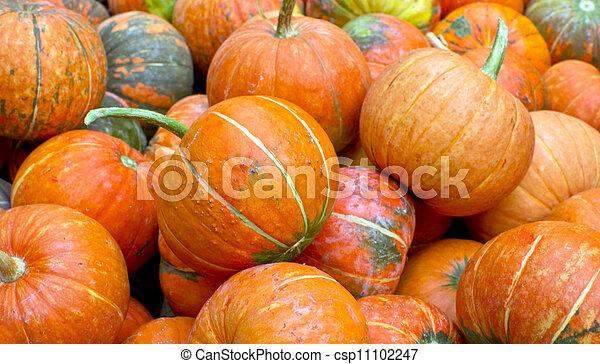 pumpkins - csp11102247