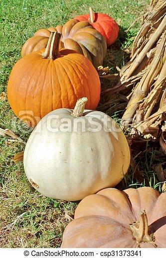 Pumpkins - csp31373341