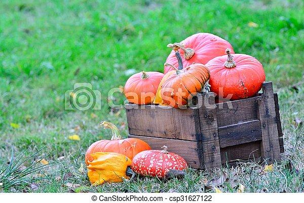 Pumpkins. - csp31627122