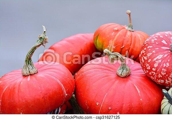 Pumpkins. - csp31627125