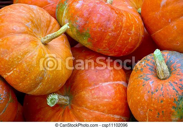 pumpkins - csp11102096