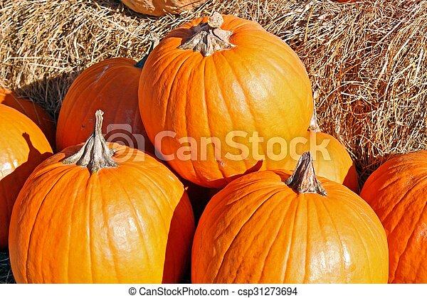 Pumpkins - csp31273694