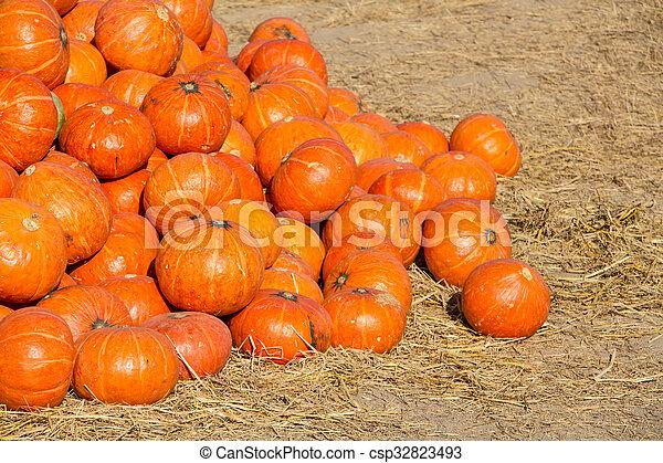 pumpkins - csp32823493