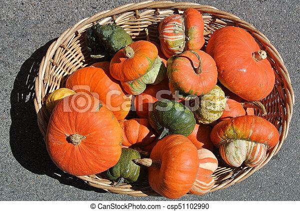 pumpkins - csp51102990