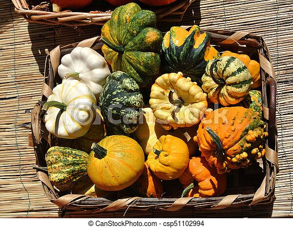 pumpkins - csp51102994