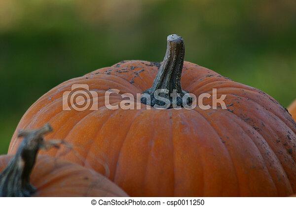 Pumpkins - csp0011250