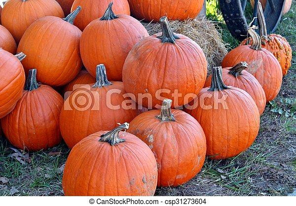Pumpkins - csp31273604