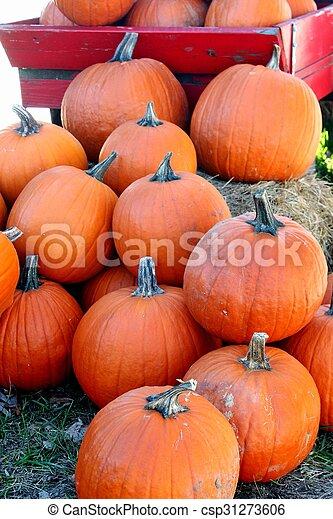 Pumpkins - csp31273606