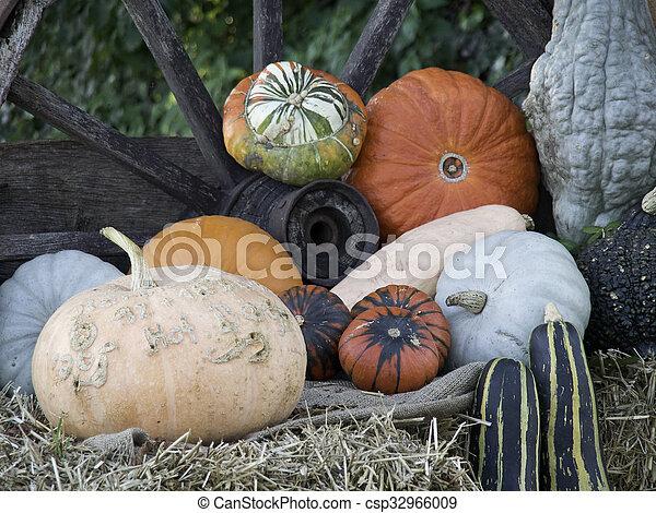 pumpkins - csp32966009