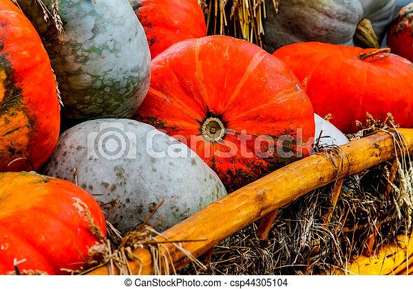 Pumpkins - csp44305104