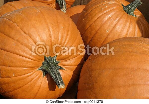 Pumpkins Texture - csp0011370