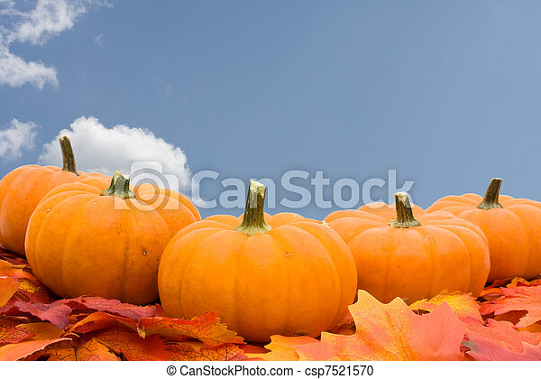Pumpkins with fall leaves - csp7521570