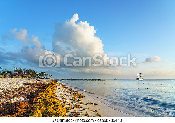 Punta Cana, Dominican Republic - June 19, 2018: sargassum seaweeds on the  beaytiful ocean beach in Bavaro, Punta Cana, the result of global warming