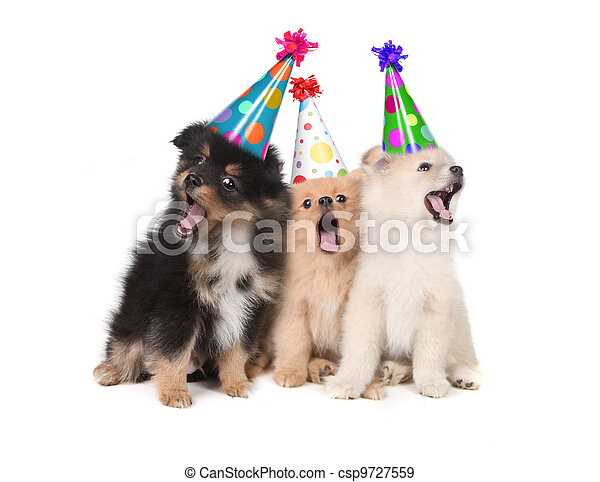 Puppies Singing Happy Birthday Wearing Party Hats  - csp9727559