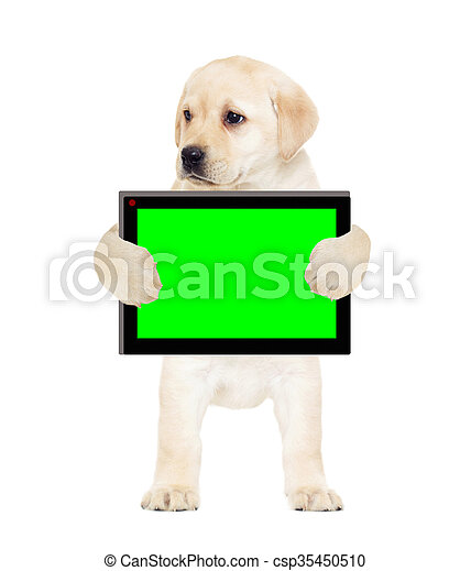 puppy and a tablet, a green screen - csp35450510