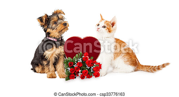 Puppy And Kitten Celebrating Valentines Day Cute Kitten And Puppy