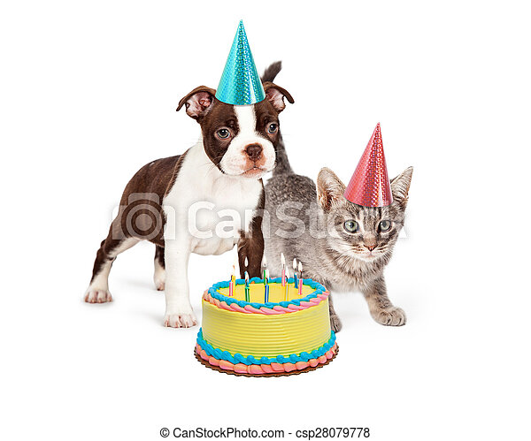 Puppy And Kitten With Birthday Cake