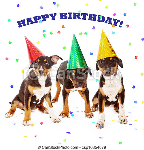 Puppy Birthday Party Three Rottweiler Mixed Breed Puppies Wearing