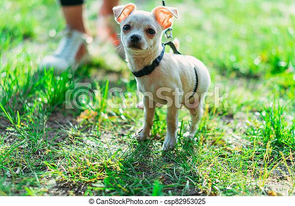 Puppy. Dog on a leash. - csp82953025