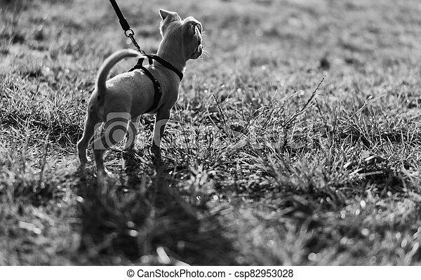 Puppy. Dog on a leash. - csp82953028