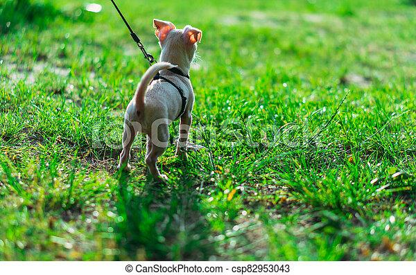 Puppy. Dog on a leash. - csp82953043