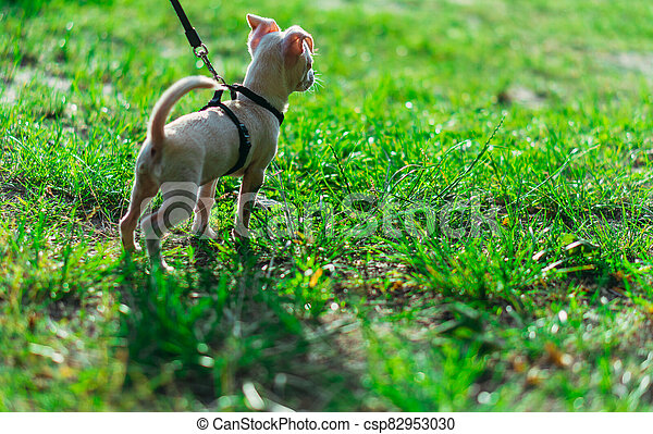 Puppy. Dog on a leash. - csp82953030