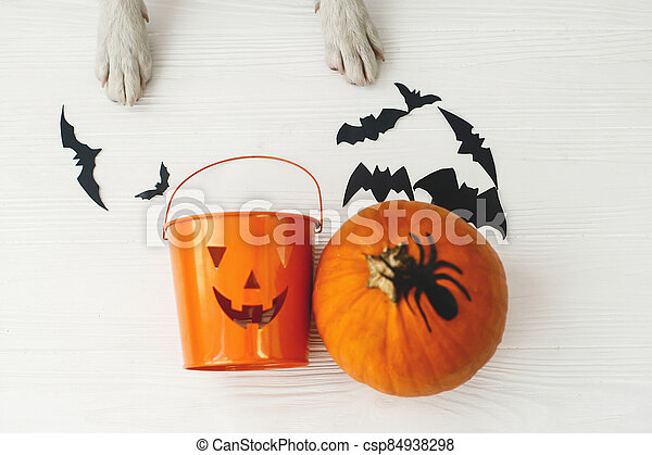Puppy holding Jack o lantern candy pail on white background with pumpkin, bats and spider decorations, celebrating halloween at home. Top view with space for text. Trick or treat! - csp84938298