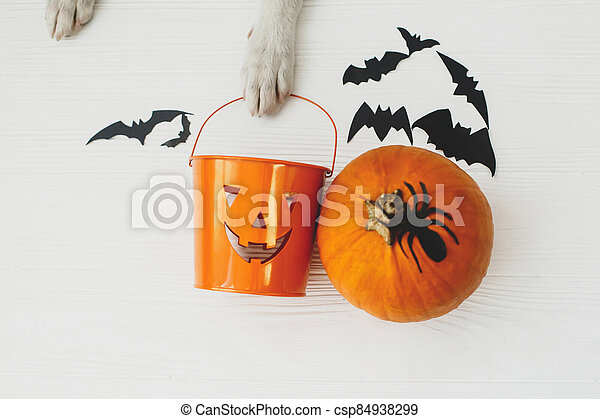 Puppy holding Jack o lantern candy pail on white background with pumpkin, bats and spider decorations, celebrating halloween at home. Top view with space for text. Trick or treat! - csp84938299