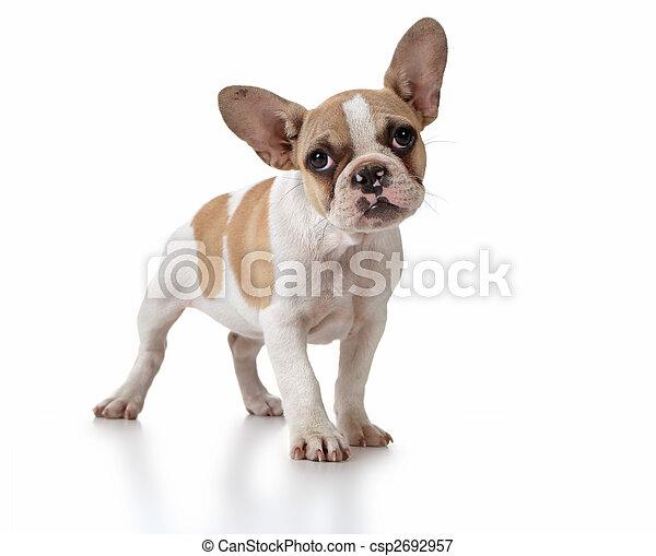 Puppy Looking Adorable - csp2692957